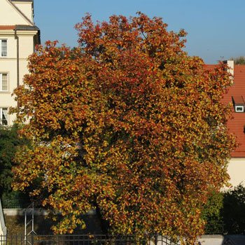 The Old Town in autumn