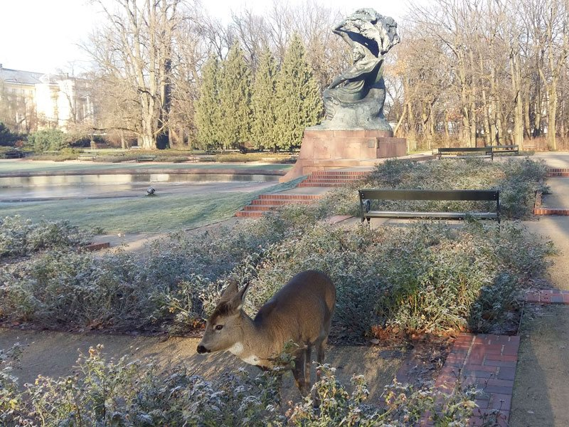 The Royal Lazienki Park, the roe-deer and Frederic Chopin